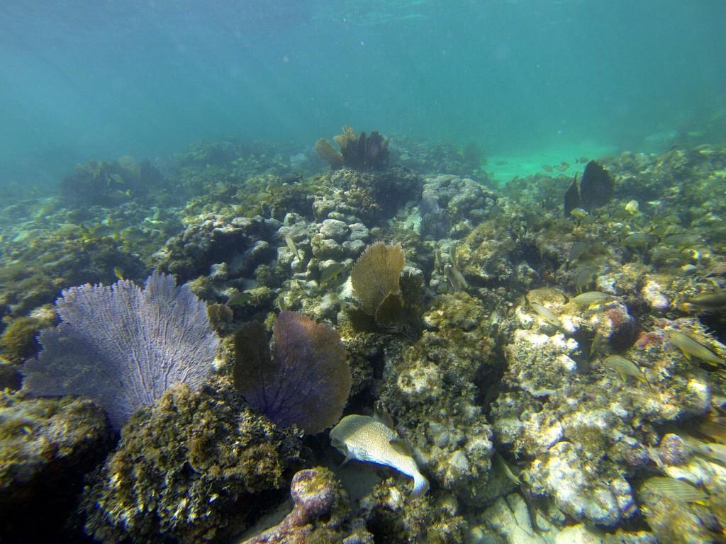 Unterwasserwelt mit Korallen