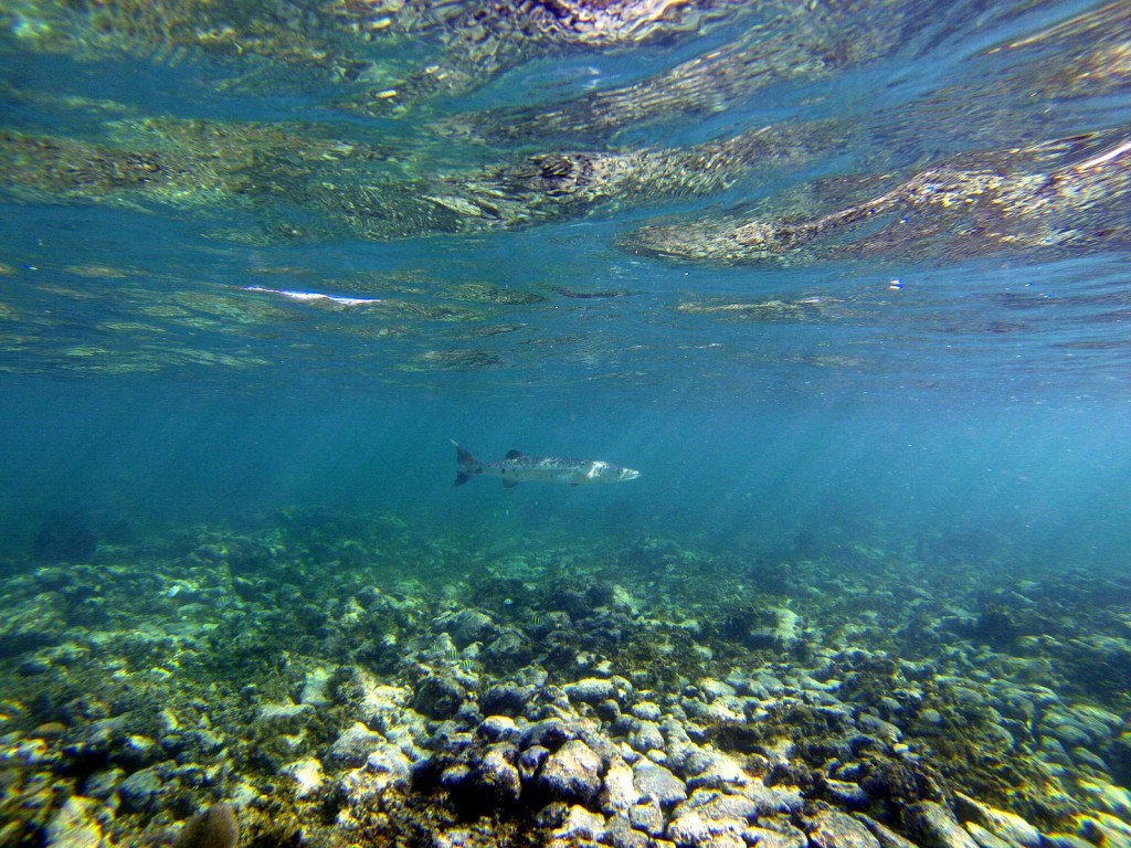 Unterwasserwelt mit grossem Fisch
