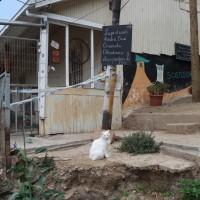 eine weisse katze in einer gasse in valparaiso
