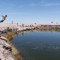 Schwimmen in den Ojos del Salar