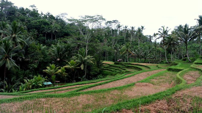 Ubud – Was hat Balis Kulturzentrum zu bieten?