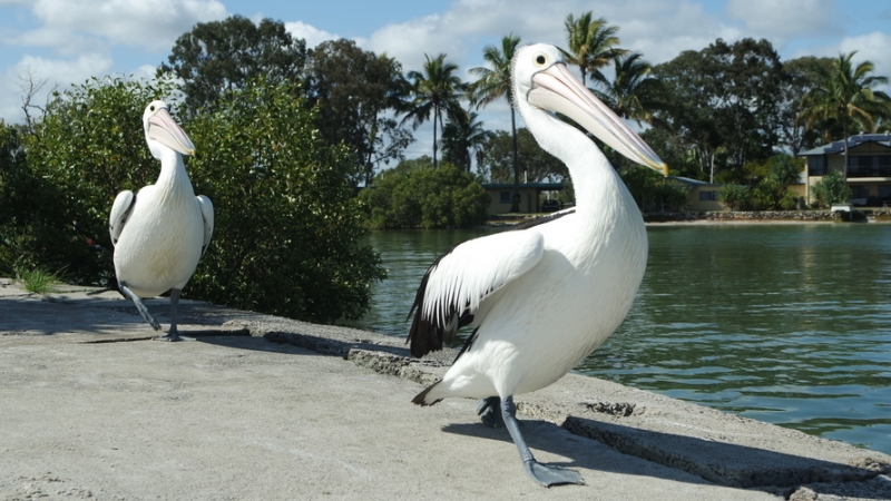 Einzigartig – Australiens Tierwelt